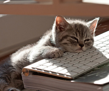 cat-sleeping-on-laptop
